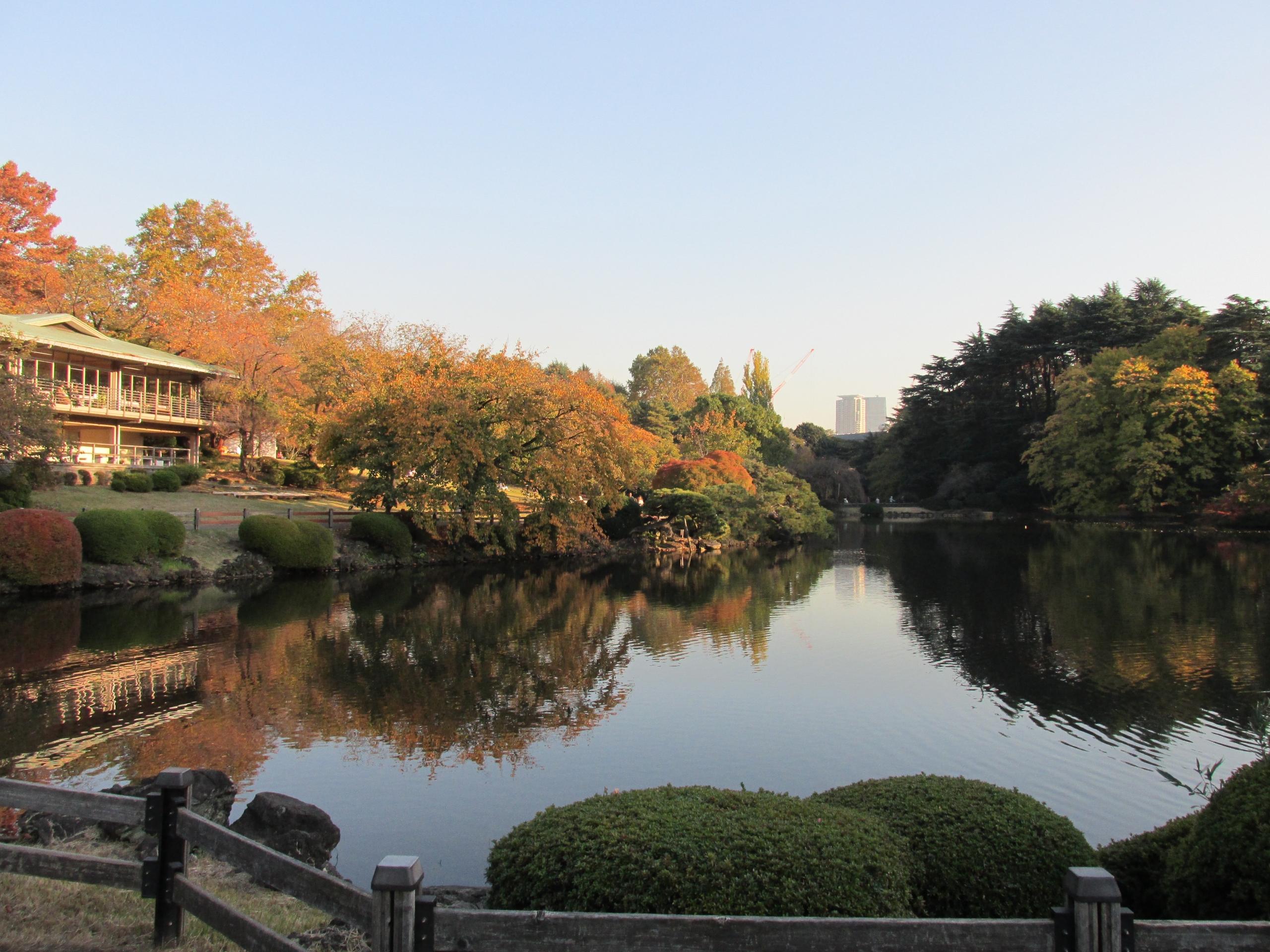 Fall in Shinjuku