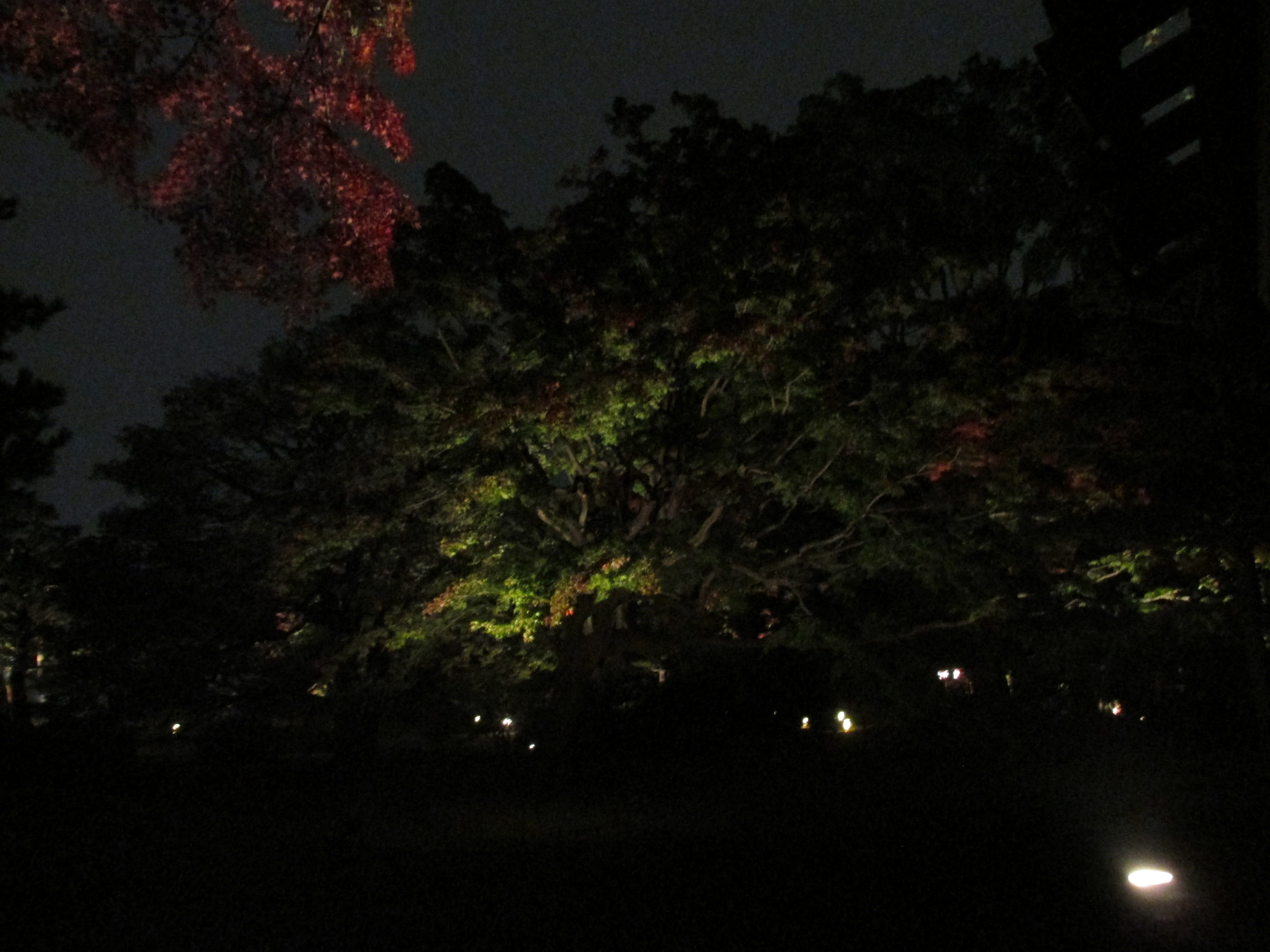 Night Illumination Show
